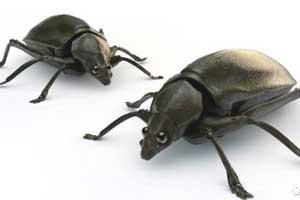 c4d甲虫模型【模型】