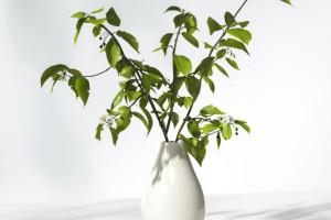 C4D模型  花瓶 床头植物 新鲜的植物【模型】