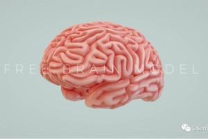 C4D模型 人脑【模型】