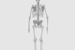 C4D高精度人体骨架骷髅【模型】【高级群】