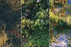 Cinema 4D教程使用Megascans和Octane创建数字自然(第1部分)【教程】