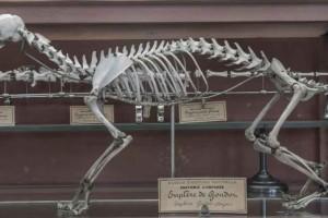 590张 1k 7k 骨头 头骨 人头骨 动物头骨 儿童骨骼 【照片素材】