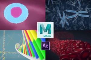【MAYA制作医学动画+源文件】Skillshare - 3D Medical Animation in Autodesk Maya【教程】