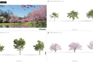 众多树木 桃树 松树【Plant Models Vol.31】【模型】