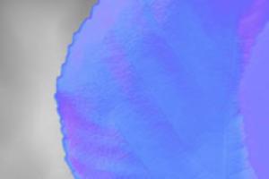 超清16K的全套树叶PBR纹理【植物纹理】