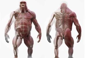 大猩猩的包含肌肉骨骼的完整模型【3D Scan Store - Gorilla Ecorche】