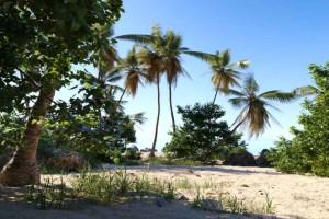 热带雨林模型【Daria Coastal Pack】