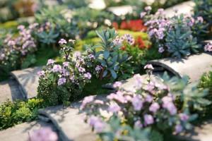 植物模型【Maxtree Plant Models Vol 42】