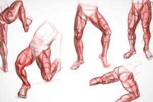 人体腿部绘画解剖【Proko Anatomy Course - Legs】