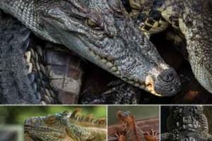 170个8K 蜥蜴照片素材【Photobash - Reptiles】