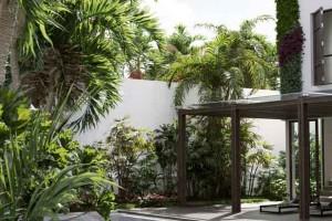 24个热带植物模型 椰子树 热带花园模型【Maxtree - Plant Models Vol. 80】