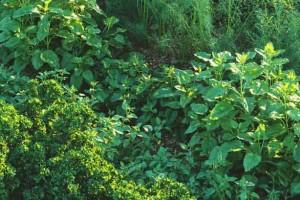 24个低矮植物模型 灌木丛模型 Max植物模型【Maxtree Vol.57】